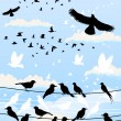 Collection of birds against the sky. — Stock Vector