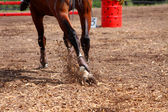 Competitions on concours - the horse skips on a field — Stock Photo