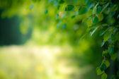 Summer nature background — Stock Photo