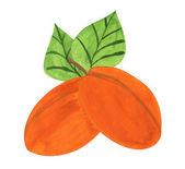 Apricots, gouache paint — Stock Photo