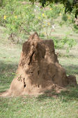 Termite hill — Stock Photo