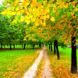 Beautiful alley in autumn park - Stock Photo