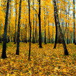 Beautiful vivid autumn forest — Stock Photo