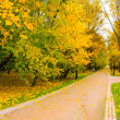 Golden orchard in autumnal park - Foto de Stock