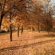 Vanishing path in autumn park - Foto de Stock