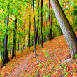 Colourful forest — Stock Photo #5487652