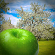 Blooming spring forest with autumn juicy apple - Stock Photo
