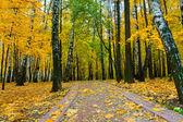 Goldene obstgarten — Stockfoto