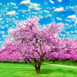 Stock Photo: Blooming apple trees over vivid cloudy sky in the garden