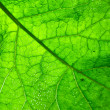 Close up green leaf texture — Stock Photo #6712590