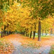 Stock Photo: Vibrant lane in the park