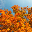 Yellow leaves over blue sky — Stock Photo
