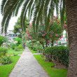 Walkway with palm trees - Stock Photo
