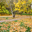 Stock Photo: Beautiful autumn landscape