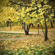 Bright fall season — Stockfoto