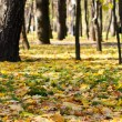 Golden forest — Stock Photo