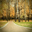 Autumn golden alley — Stock Photo