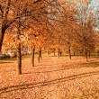 Vanishing path in autumn park — Stock Photo