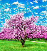Blooming apple trees over vivid cloudy sky in the garden — Stockfoto