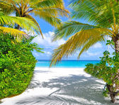 Tropical beach with palm trees near blue sea — Stock Photo