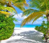 Tropikalnej plaży z palmami, w pobliżu morza — Zdjęcie stockowe
