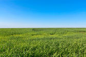 Sunny lea in summertime — Stock Photo
