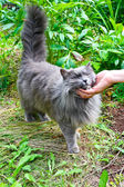 Beautiful gray cat outdoor — Stock Photo