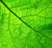 Close up green leaf texture — Stock Photo