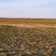 Steppe. — Stock Photo