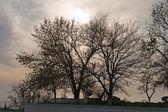 夕阳树. — 图库照片