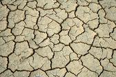 Cracks in the ground. — Stock Photo
