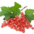 Fresh red currant isolated — Stock Photo