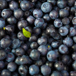 Fresh blueberries background — Stock Photo