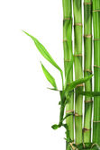Bamboo frame isolated — Stock Photo