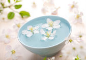 White flowers in bowl — Stock Photo