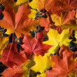 Colorful autumn leaves background — Stock fotografie