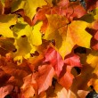bunter herbst laub background — Stockfoto