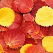 Colorful autumn leaves background — Stockfoto #6441431