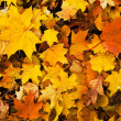 Colorful autumn leaves background — Stockfoto #6441485