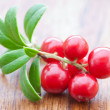 Fresh cowberry — Stock Photo #6441541