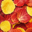 Colorful autumn leaves background — Stockfoto #6699898