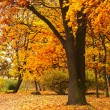 Autumn tree — Stockfoto #6699925