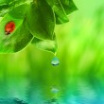 Божья коровка, сидя на зеленой траве отражено в оказываемых воды — Стоковое фото