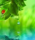 Ladybug sitting on green grass reflected in rendered water — Stock Photo