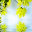 Royalty-Free Stock Photo: Green leaves reflected in rendered water