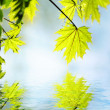 Green leaves reflected in rendered water — Stock Photo