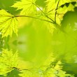 Stock Photo: Green leaves reflected in rendered water