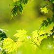 Picture of a green leaves over abstract blurred background - 图库照片