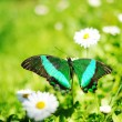 Beautiful butterfly on flower — Stock Photo #5811499