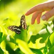 Stock Photo: Human hand and beautiful butterfly